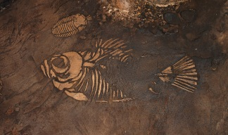 Fish Skeleton from Carved Concrete